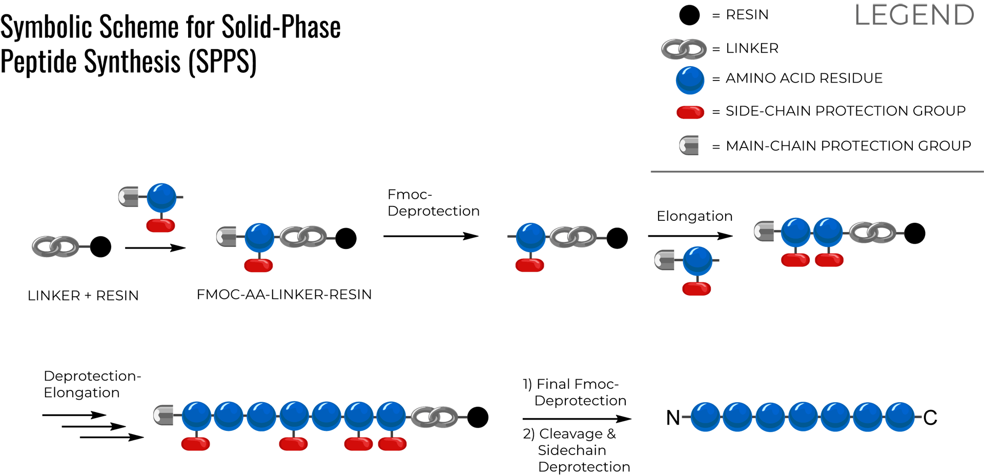Solid-phase peptide synthesis (SPPS) scheme